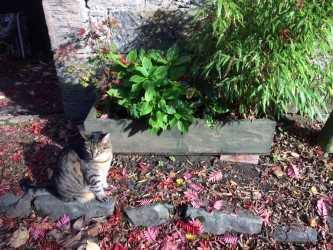 Cat at Gate.jpg